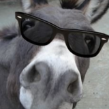 donkey_______666