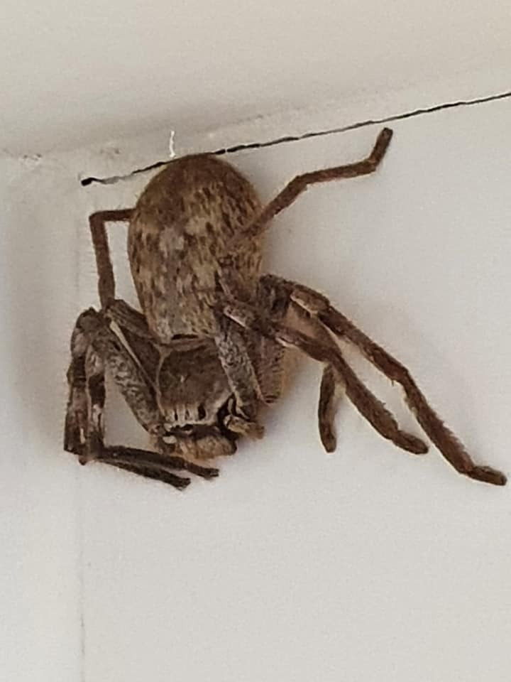 just for my friend redsprite  found in a house in bathroom australia   and crack-on bet you don't pick this fker up and put it outside